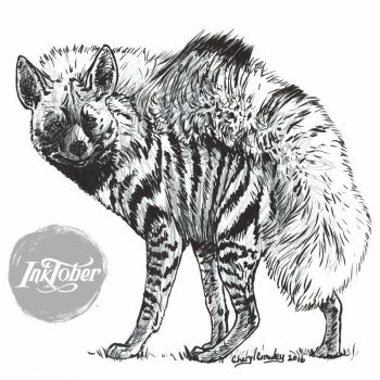 Inktober Day 13 Scared Striped Hyena by silvercrossfox