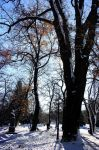 Park in winter 2 by lapis-lazuri