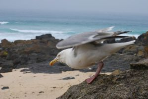 Seagull 2 by BEH1NDTHET1MES