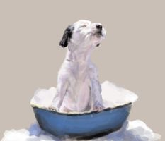 pup in a tub by vegas9879
