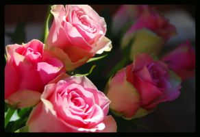 roses by cicci89