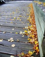 Autumn's Pathway by mandycorinthos