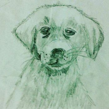dog by Gracealessia02