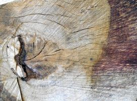 Stock texture - sawn off branch by rockgem