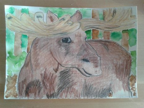 Moose by MymmyVHS