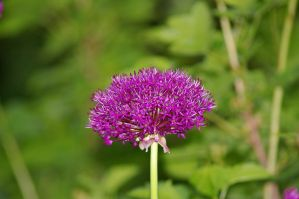 Purple flower I by expression-stock