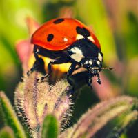 Lady Bug by deex-helios