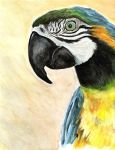 Macaw Parrot by Adamb22