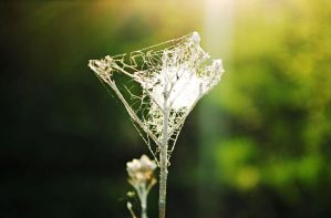 Spider web in evening sun by SunsetFading