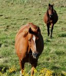 Horses approaching by KeenPhotography