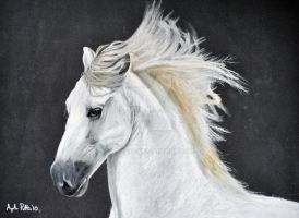 Andalusian in Pastel by Loukya