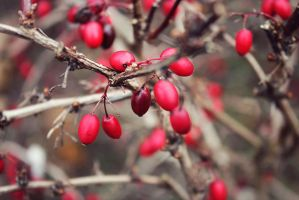 Red berries by summertimesadness98