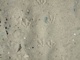 SMD Free Texture 14: Bird Tracks in Sand by Spicy-Monster