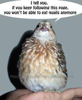 Hear the wise quail say by emmil