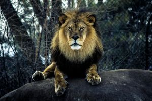 The King by msteenphotographer