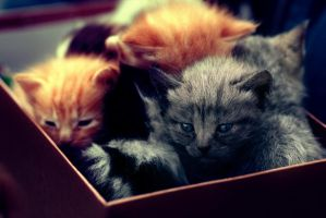 Box of kittens by DopeStars