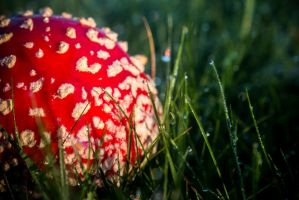 picture of a mushroom by DanielGliese