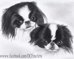 Japanese Chin's by FlyingFancy1