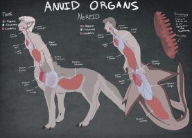 Anuid Organ Chart by Lunafex