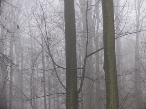 My-Stock - Foggy by my-stock