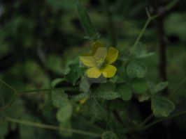 Gold Flower in the Dark by sarlaz