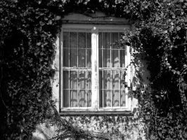 window by Arrakis7