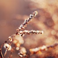 looking for winter sun. by magnesina