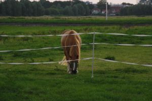 12-07-26 Eating Grass 1 by Herdervriend
