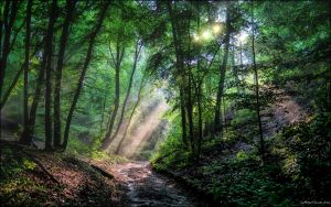 Gliding Into Light And Knowledge by indeepsilence