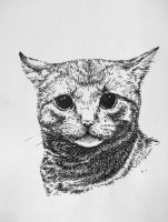 caaat. by Concini