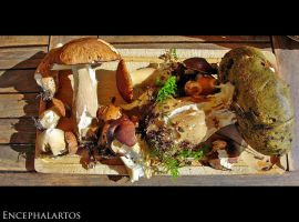 A Shortcut to Mushrooms by Encephalartos