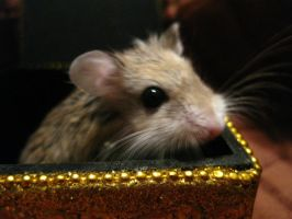 Golden Boxed Hamster by ShiblesnBits