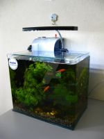 My Community Aquarium Tank by OsmosisChing