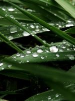 Rain Drops 8 -untouched- by IoannisCleary