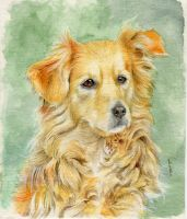 Dog watercolors *commission* by Luisamd