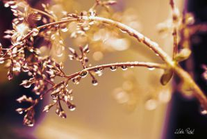 golden drops by Zlata-Petal