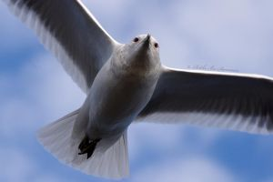 Evil Gull by RBSpictures
