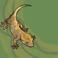 Crested Gecko doodle by suchomimus