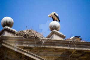 Stork on the roof by eipar