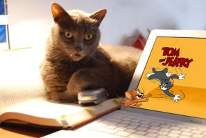 RealTime Tom and Jerry Cartoon by Mumtazzaidi