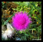 Vibrant Thistle by LetsAllBeNuerotic