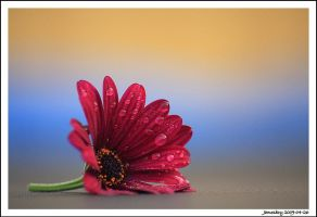 heart red... by jamesboy
