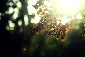 leaves - stock by CO2PHOTO-stock