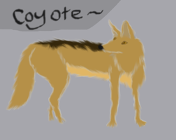 Coyote by iamMyla