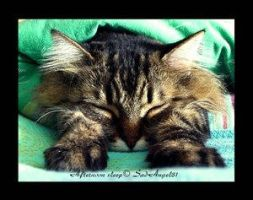 Afternoon sleep by Cats-Paw
