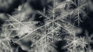 Snowflake by Angellore69