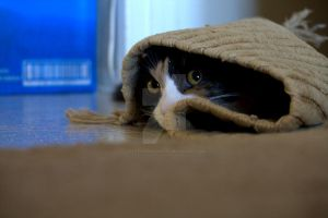 Toola my calico cat hidding under a rug by Pabloramosart