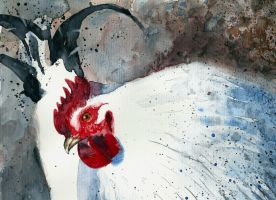 Rooster by Medhi