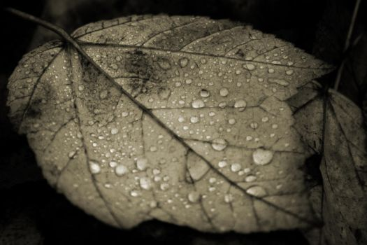 Leaf Droplets by breaking-reality