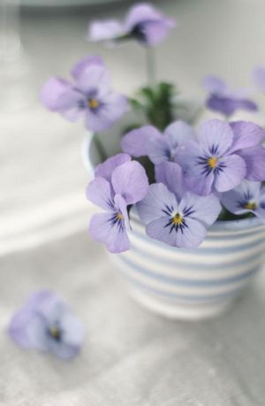 Purple violas in a striped cup by Annyutka